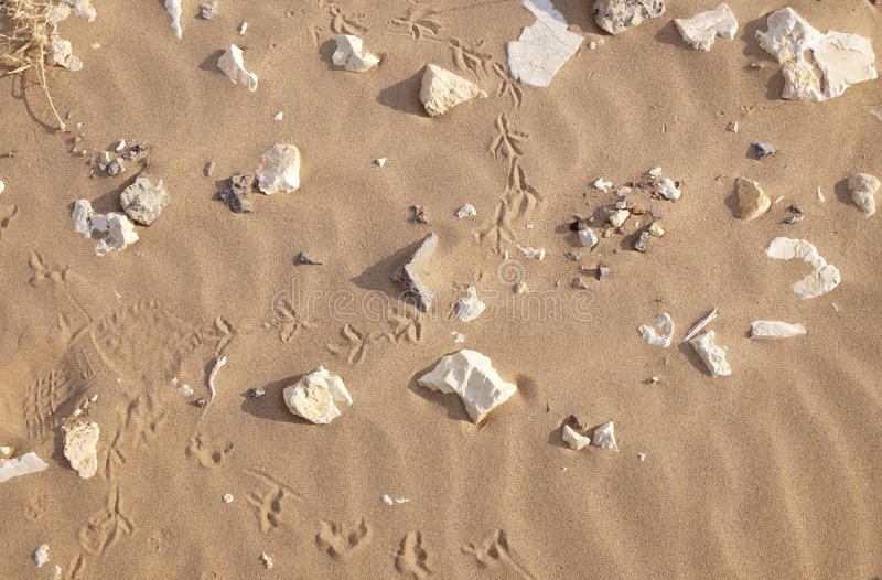 Sand and stones on a beach royalty free stock image