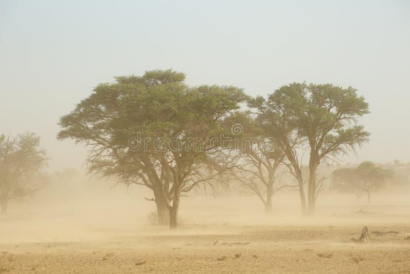 Sand storm - Kalahari desert royalty free stock photo