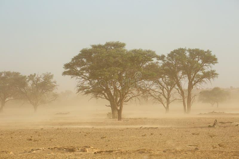 Sand storm - Kalahari desert. Landscape with trees during a severe sand storm in the Kalahari desert, South Africa royalty free stock photo