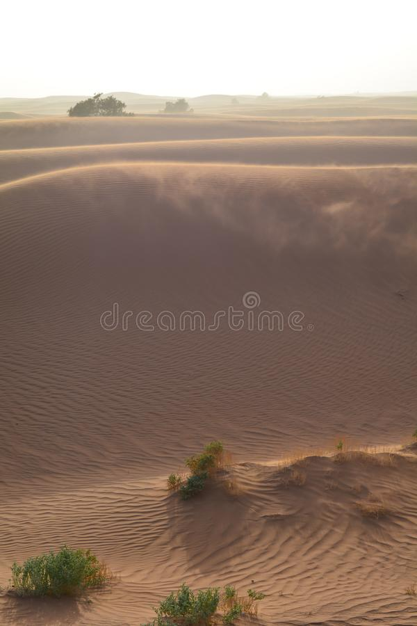 Windy days in a desert. Sand, storms, plants, dryness and beauty of desert stock photo