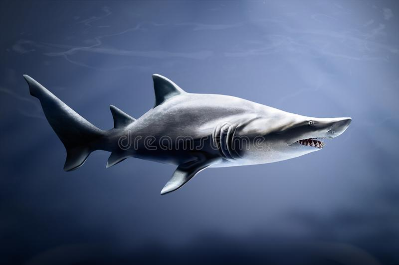 Sand tiger shark in deep waters stock image