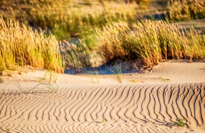 Sand und Gras stockbilder