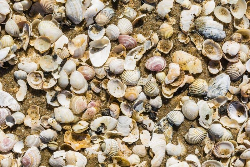 Sand und Oberteile stockfotografie