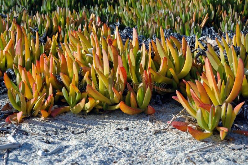 Download Sand vegetation stock image. Image of thassos, yellow - 25545265