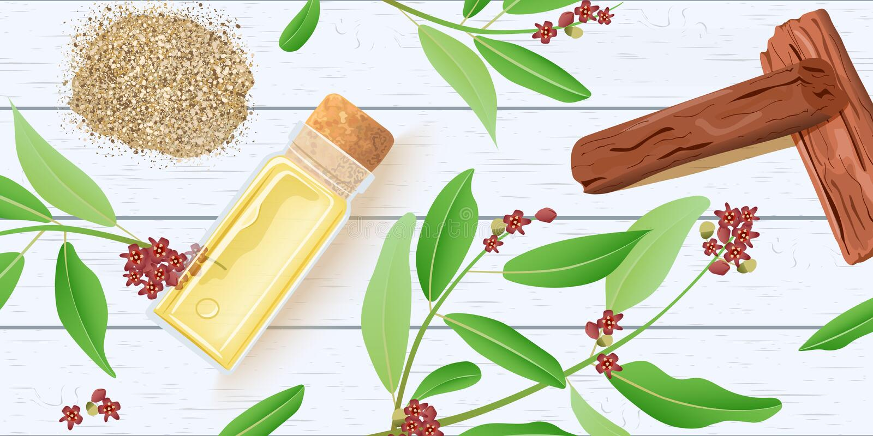 Sandałowa istotny olej w szklanej perfumowanie butelce z korkiem na białym drewnianym podławym biurku Chandan liście, kije royalty ilustracja