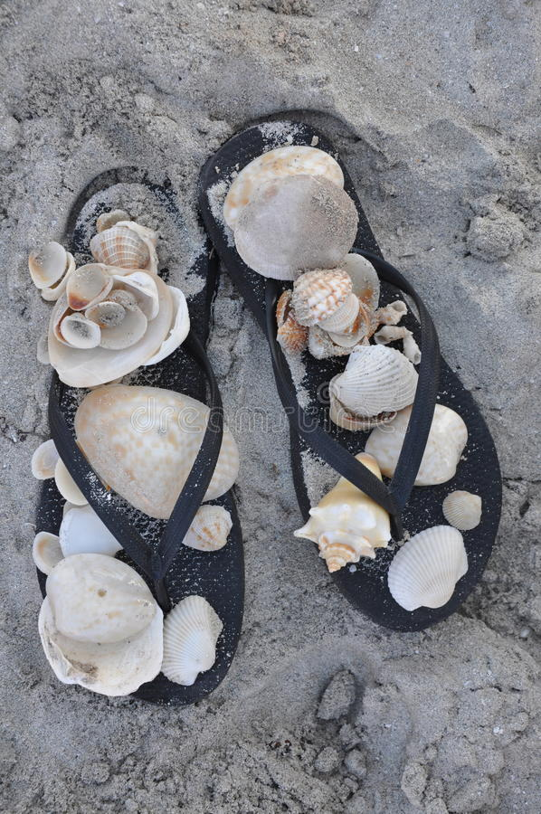 Sandaler och skal arkivbild