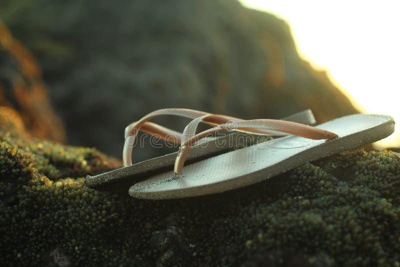 Sandales de Brown sur la roche de mer avec le fond de croissance d'algue photos stock