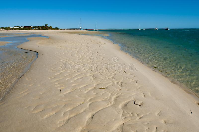 Sandbar i apan Mia arkivbilder