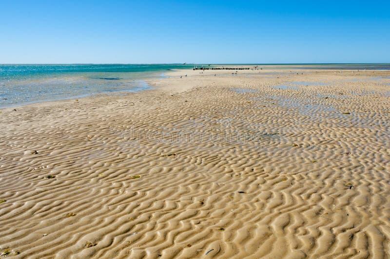Sandbar i apan Mia arkivbild