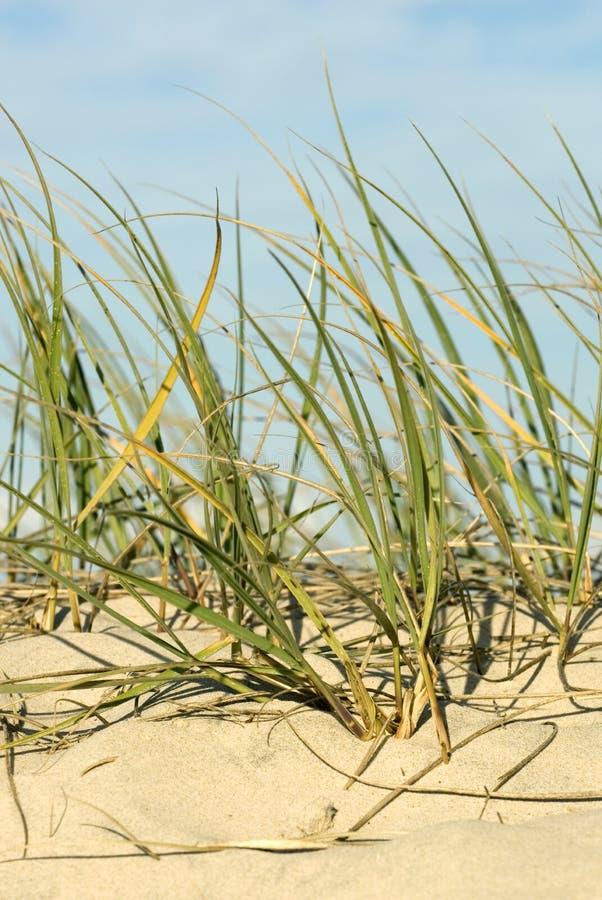 Sanddüne auf Strand stockfotografie