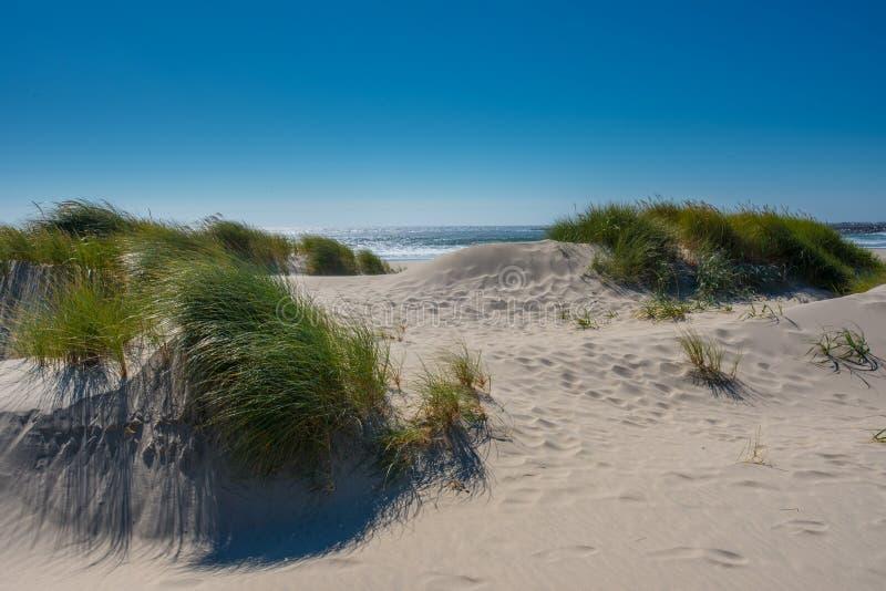 Sanddüne-Blick über Pazifischem Ozean lizenzfreies stockfoto