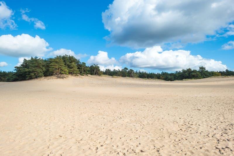 Sanddüne entlang einem Wald stockbild