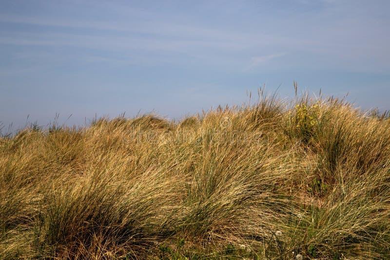 Sanddüne mit Strandhafer-Gras an einem Küstenstandort lizenzfreies stockfoto