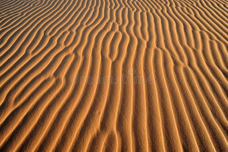 Sanddüne, Nahaufnahme stockfotos