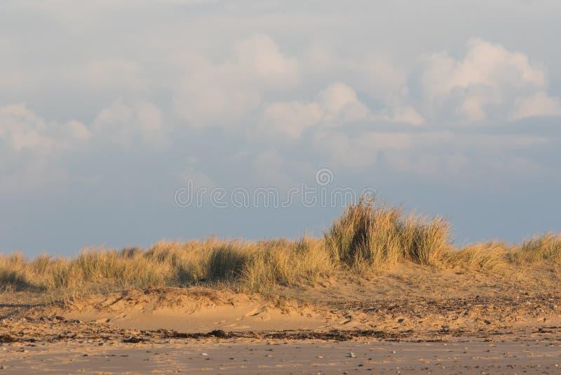 Sanddüne-Strandhafergrasgrenze Küstenhintergrund im der einsamen Insel lizenzfreies stockbild