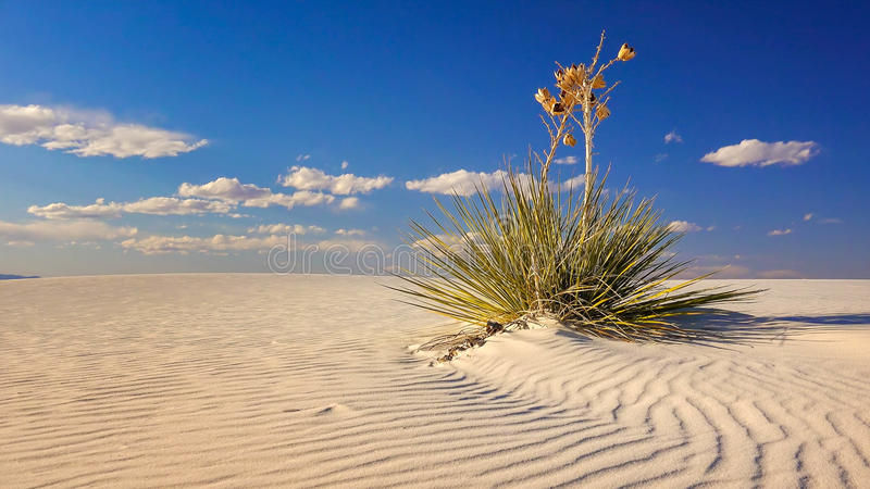 Sanddüne und Yucca am Weiß-Sand-Nationaldenkmal, New Mexiko stockfotografie