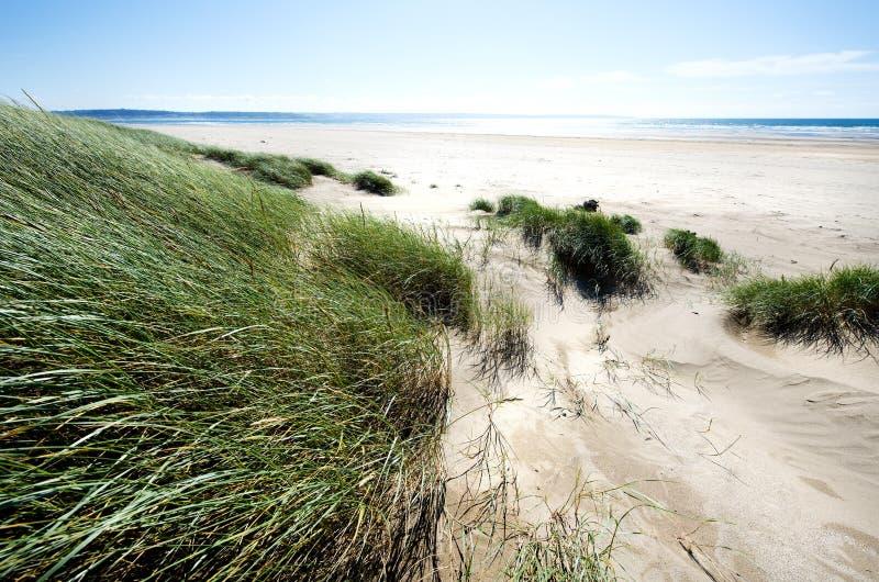 Sanddünen entlang der Küstenlinie stockfotos