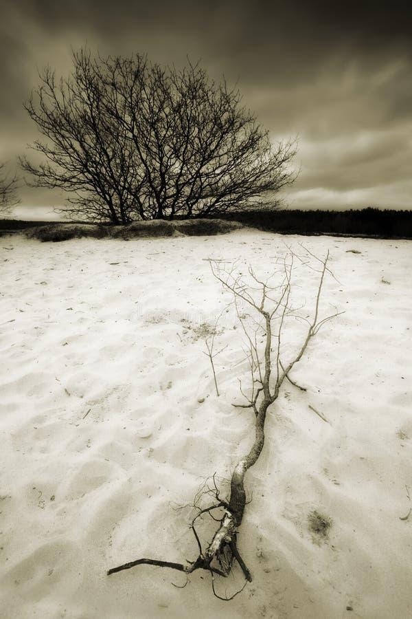 Sanddünen mit Baum lizenzfreies stockfoto