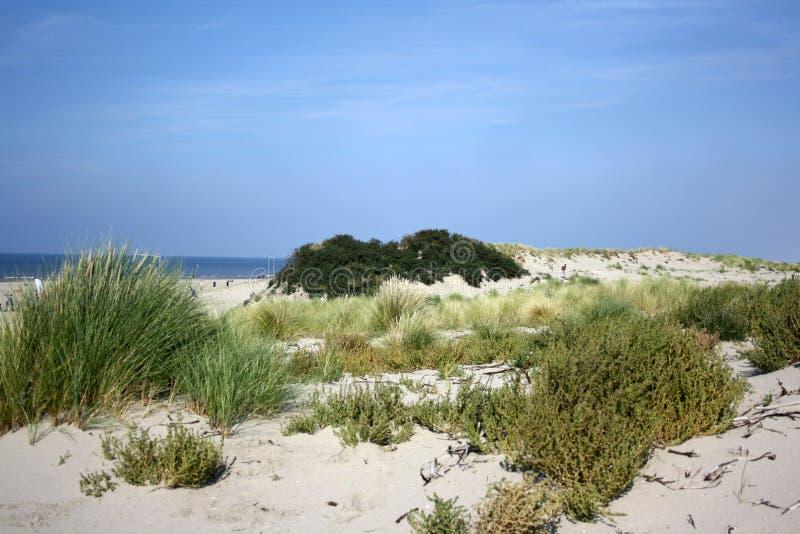 Sanddunes w holandiach obraz stock