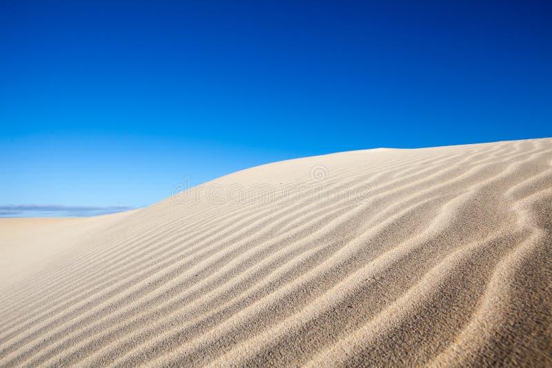Sanddyn fotografering för bildbyråer