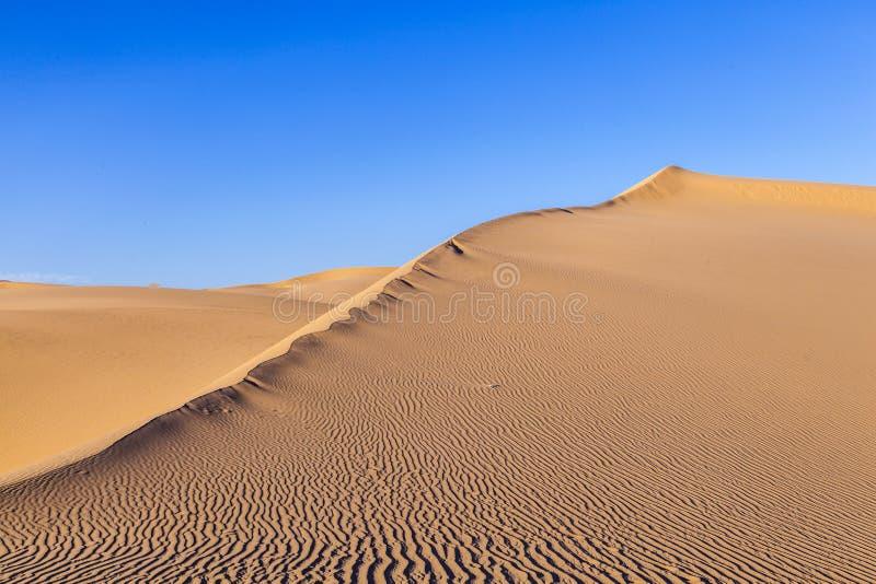 Sanddyn i soluppgång i öknen arkivfoton