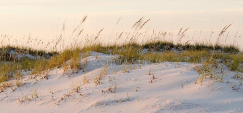 Sanddyn i vinden arkivfoto