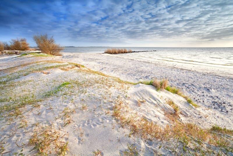 Sanddyn på stranden arkivbild