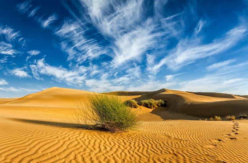 Sanddyner i öken fotografering för bildbyråer