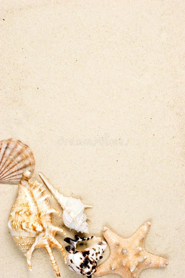 sanden shells sjöstjärnan royaltyfria foton