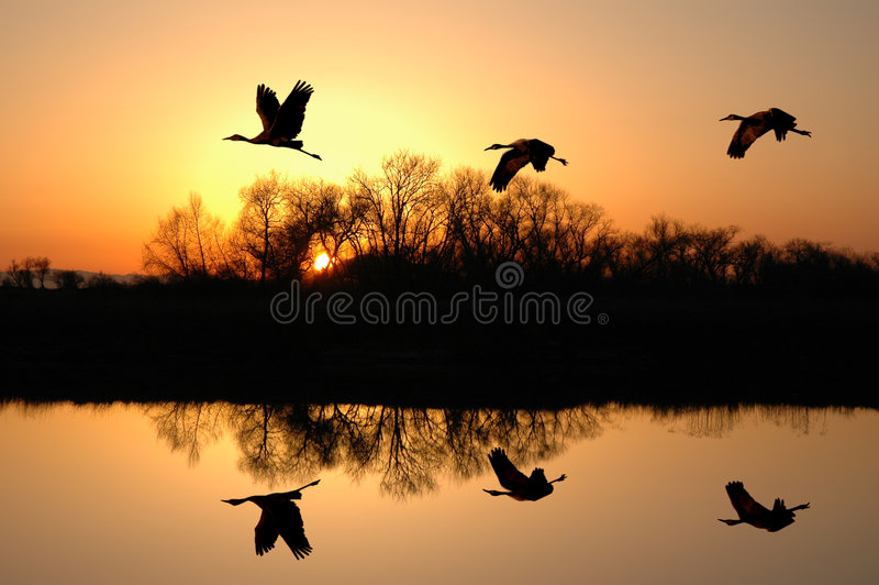 Download Sandhill Cranes at Sunset stock image. Image of pond, evening - 2482529