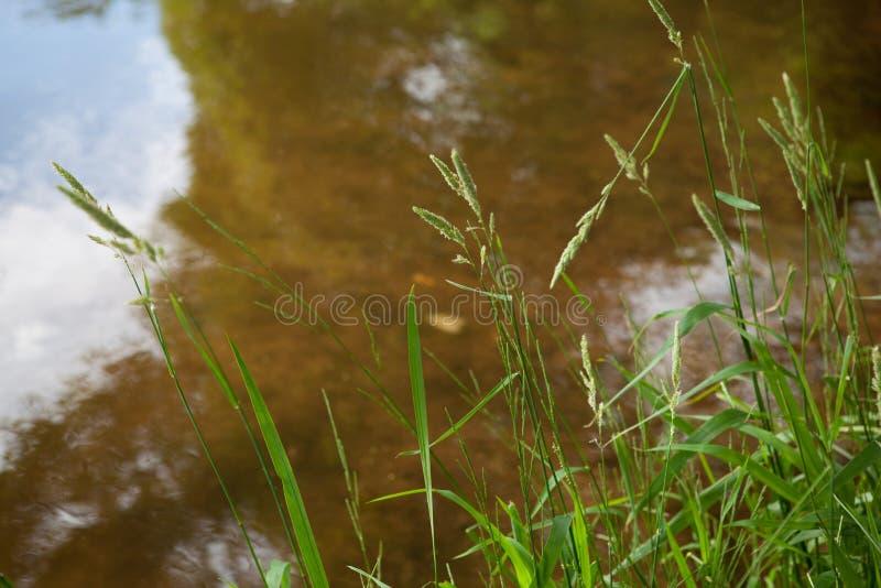 Sandig botten av ett bevuxet damm arkivfoton