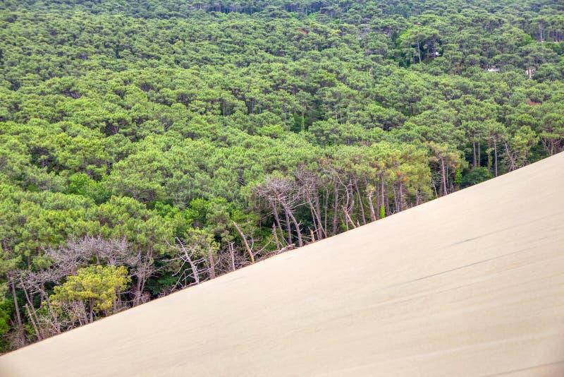 Sandig dyn och skog royaltyfria bilder
