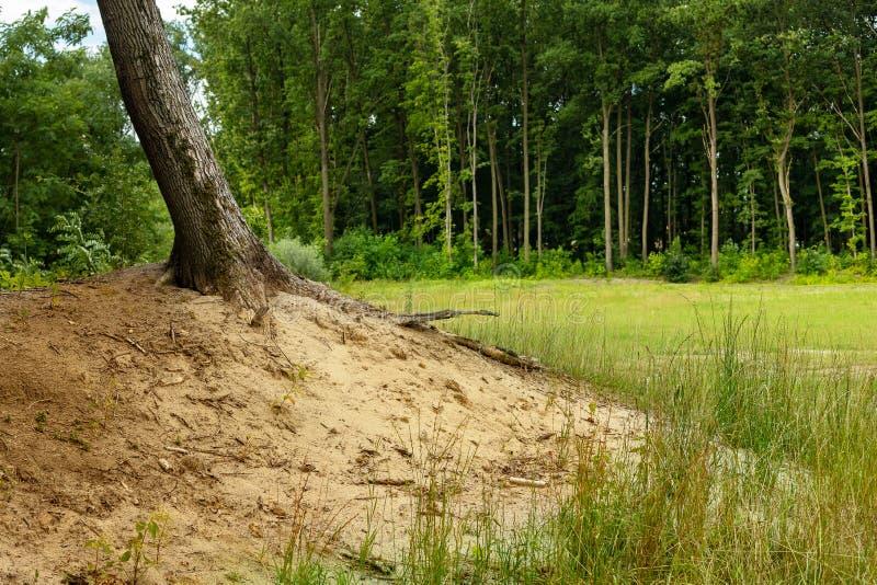 Sandig kulle i skogen arkivfoton