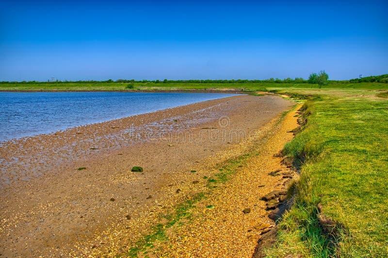 Sandig kust med grönt gräs på solig dag, Holland royaltyfri bild