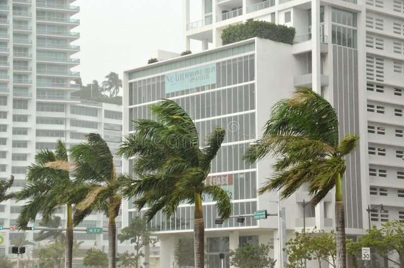 Sandig orkan arkivfoton