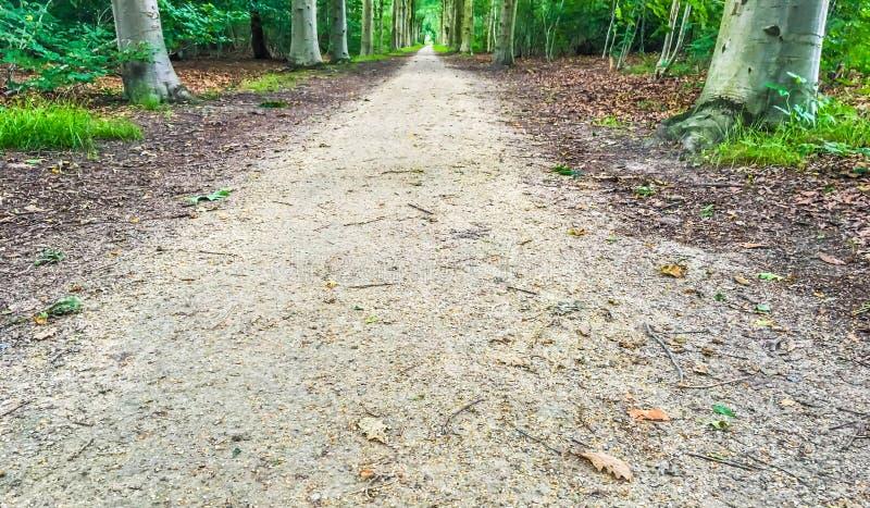 Sandig skogväg i slut upp med trädstammar och sidor royaltyfria bilder