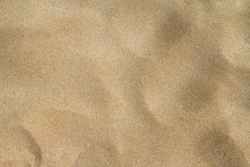 Sandig strand i sommar royaltyfri bild