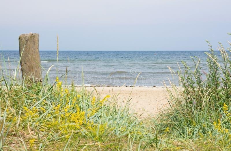 Sandig strand och vegetation, arkivfoton