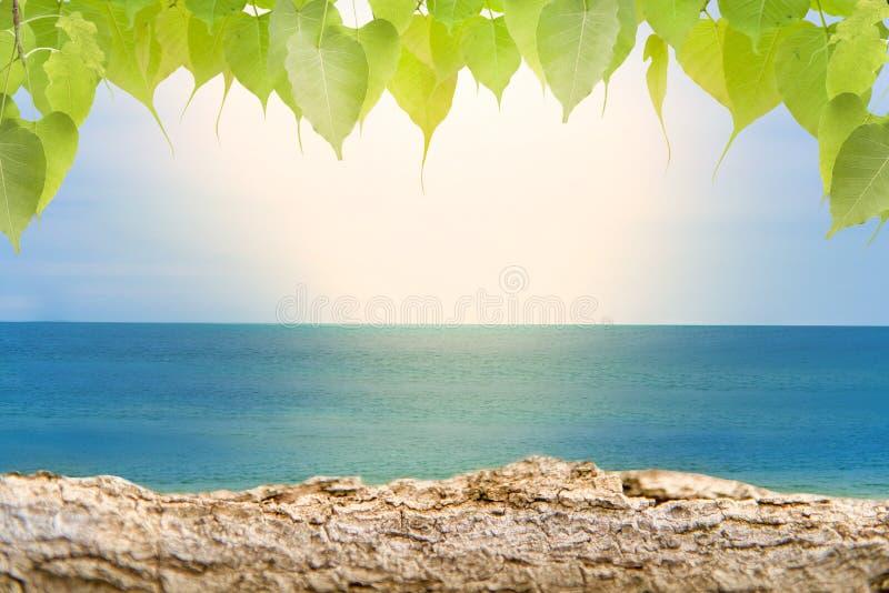Sandiga stränder med journaler och lövverk, tropiska bokehstrandbakgrunder, sommarsemestrar och loppidéer royaltyfria bilder