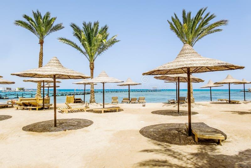 Sandiga stränder med slags solskydd på Röda havet royaltyfria bilder