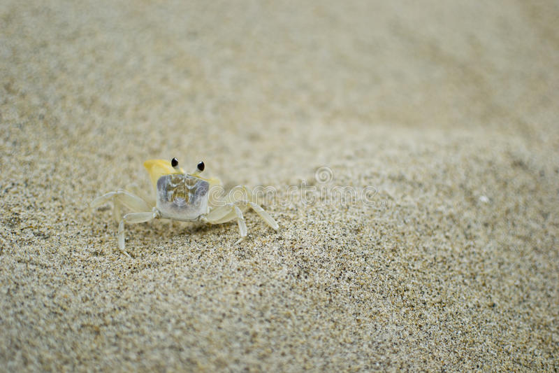 Sandkrabba royaltyfri fotografi