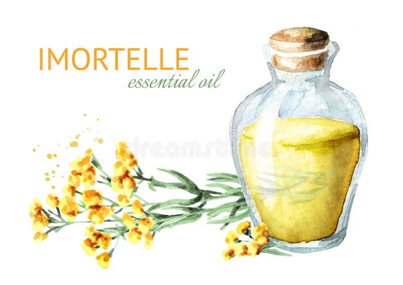 Sandless immortelle istotny olej Kolor żółty kwitnie Helichrysum arenarium lecznicza roślina Akwareli ręka rysująca ilustracja, i royalty ilustracja