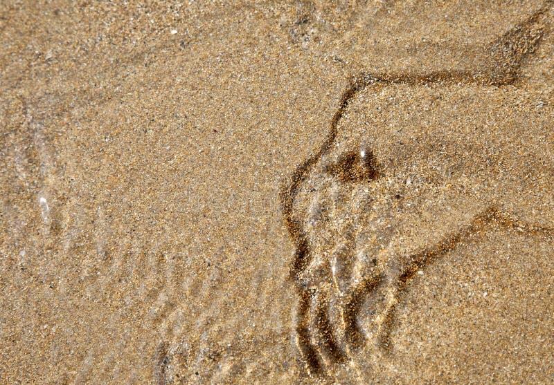 Sandmonster stockfotos