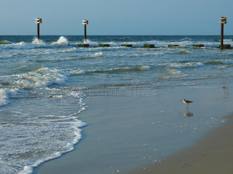 Sandpiper Beside a Pier on the Atlantic Coastline at Carolina Beach. A sandpiper bird reflected on the sand next to a pier jutting into the Atlantic Ocean in royalty free stock photo