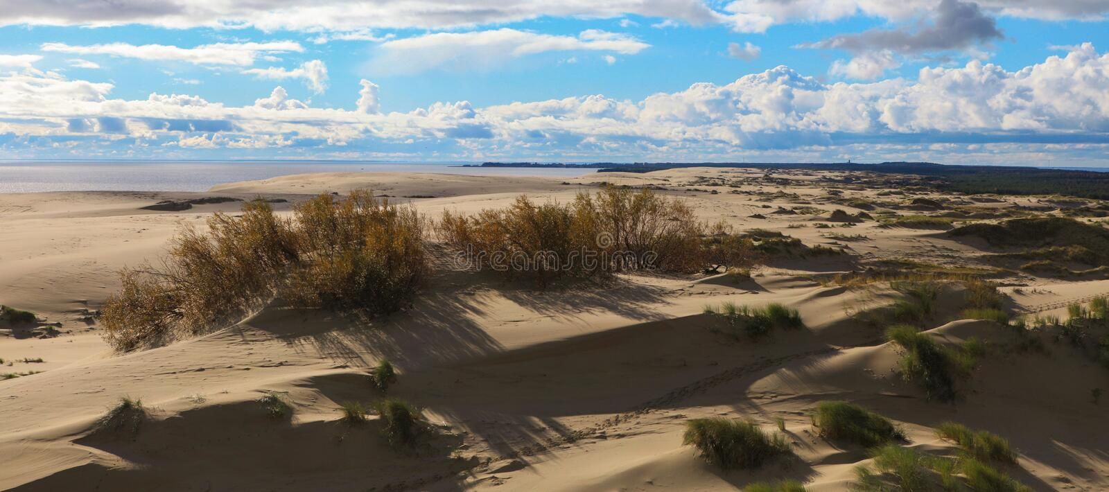 Download Sands of the Curonian Spit stock image. Image of bush - 36683897