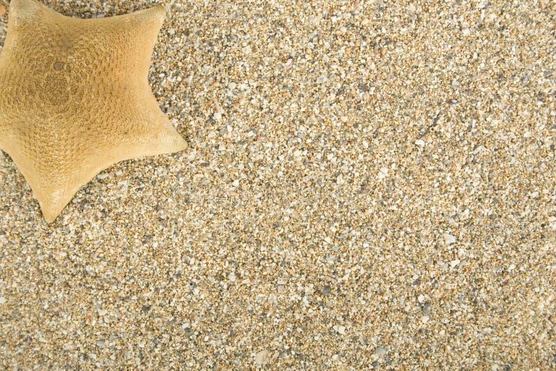 sandsjöstjärna royaltyfri fotografi