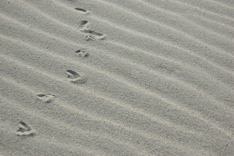 Download Sandspår fotografering för bildbyråer. Bild av krusigt - 523925