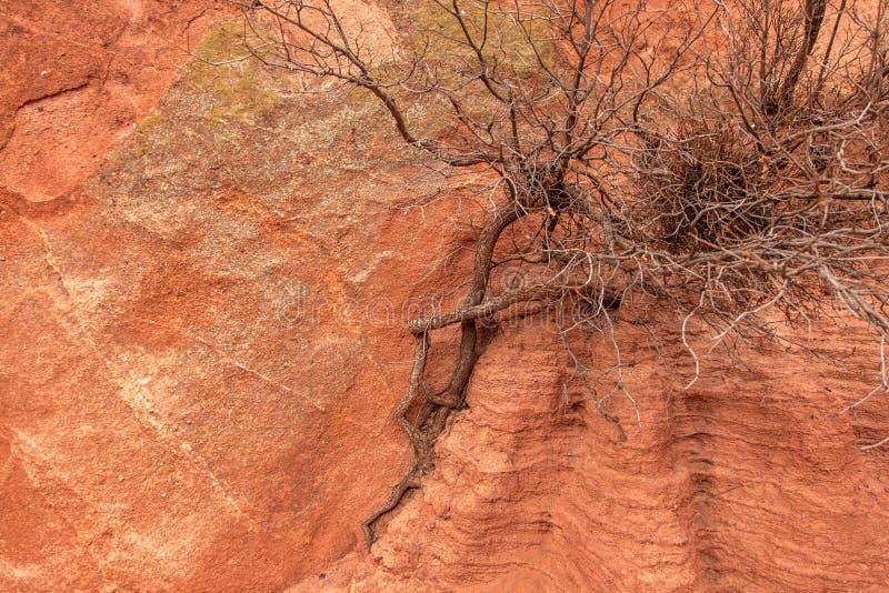 Sandsten- och trädtextur royaltyfri fotografi