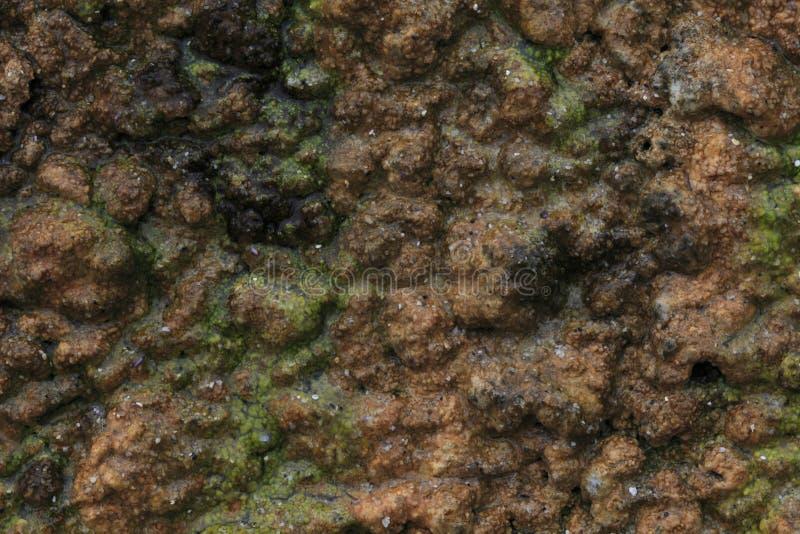 Sandstone And Algae Stock Photography