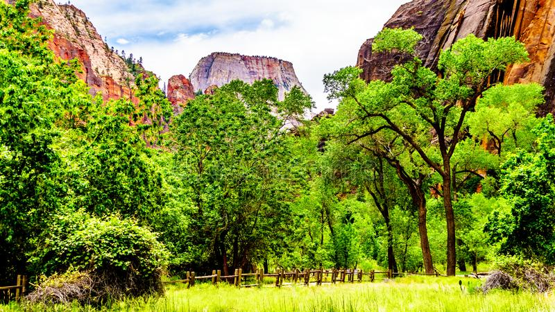 The Sandstone Mountains surrounding The Narrows in Zion National Park, UT, USA. The Sandstone Mountains surrounding the North Fork of the Virgin River at Mystery royalty free stock photo
